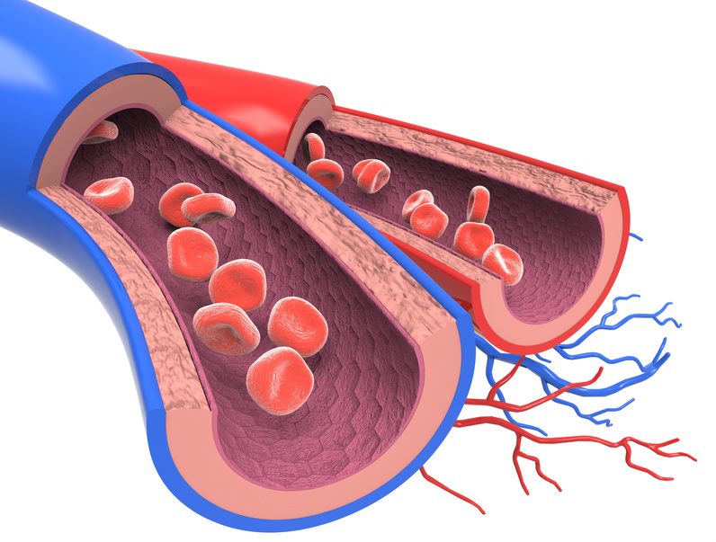 Arterie und Vene